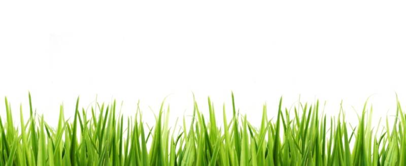 Grass border pictures to pin on pinterest pinsdaddy for Tall border grass